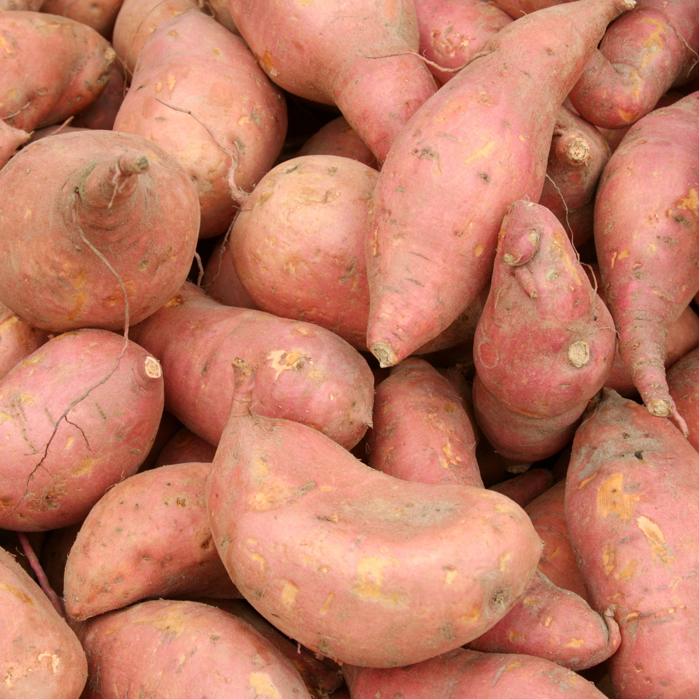 Fresh Sweet Potatoes Yams