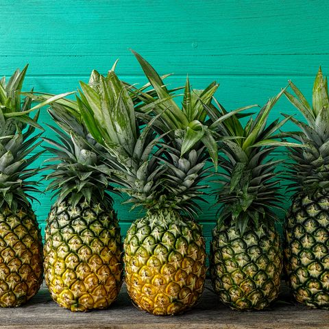 Fresh two-headed tropical pineapple standing in the middle of a row of pineapples, on a rustic wooden table against a turquoise wooden walled background.