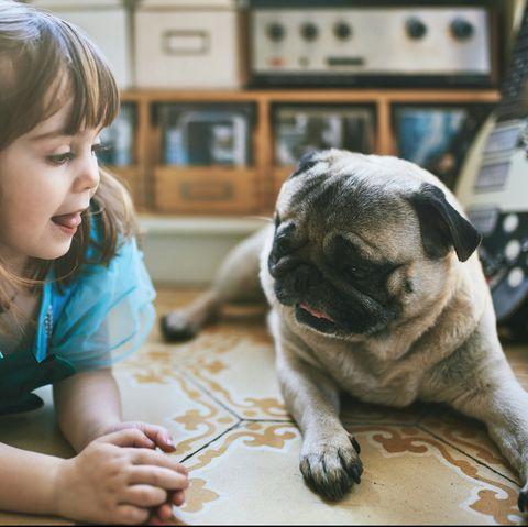 friendliest-dog-breeds