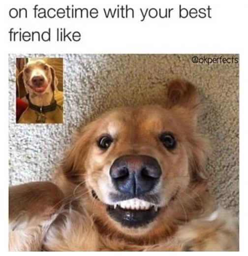 friendship meme 1513861285?crop=1xw 1xh;centertop&resize=480 * friendship memes 26 funny friend memes to send to your bestie