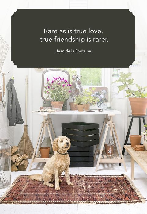 60 Cute Best Friend Quotes Short Quotes About True Friends Enchanting Quote About True Friendship