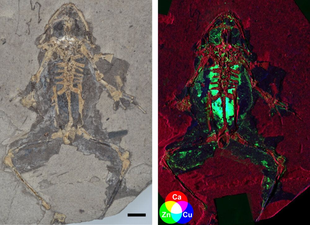 Scientists Learned How to Reconstruct Long-Extinct Animals