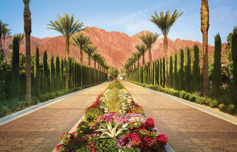 double driveway with pink and green florals in between, surrounded by palm trees and looking out into red mountains