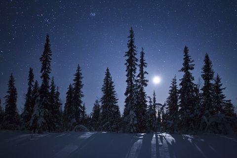 frozen forest in moonlight, kiruna, sweden