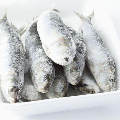 frozen sardines in bowl on white background