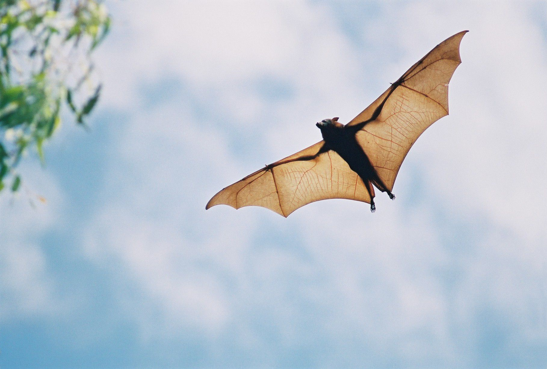 Bat-inspired technology could help the visually-impaired.