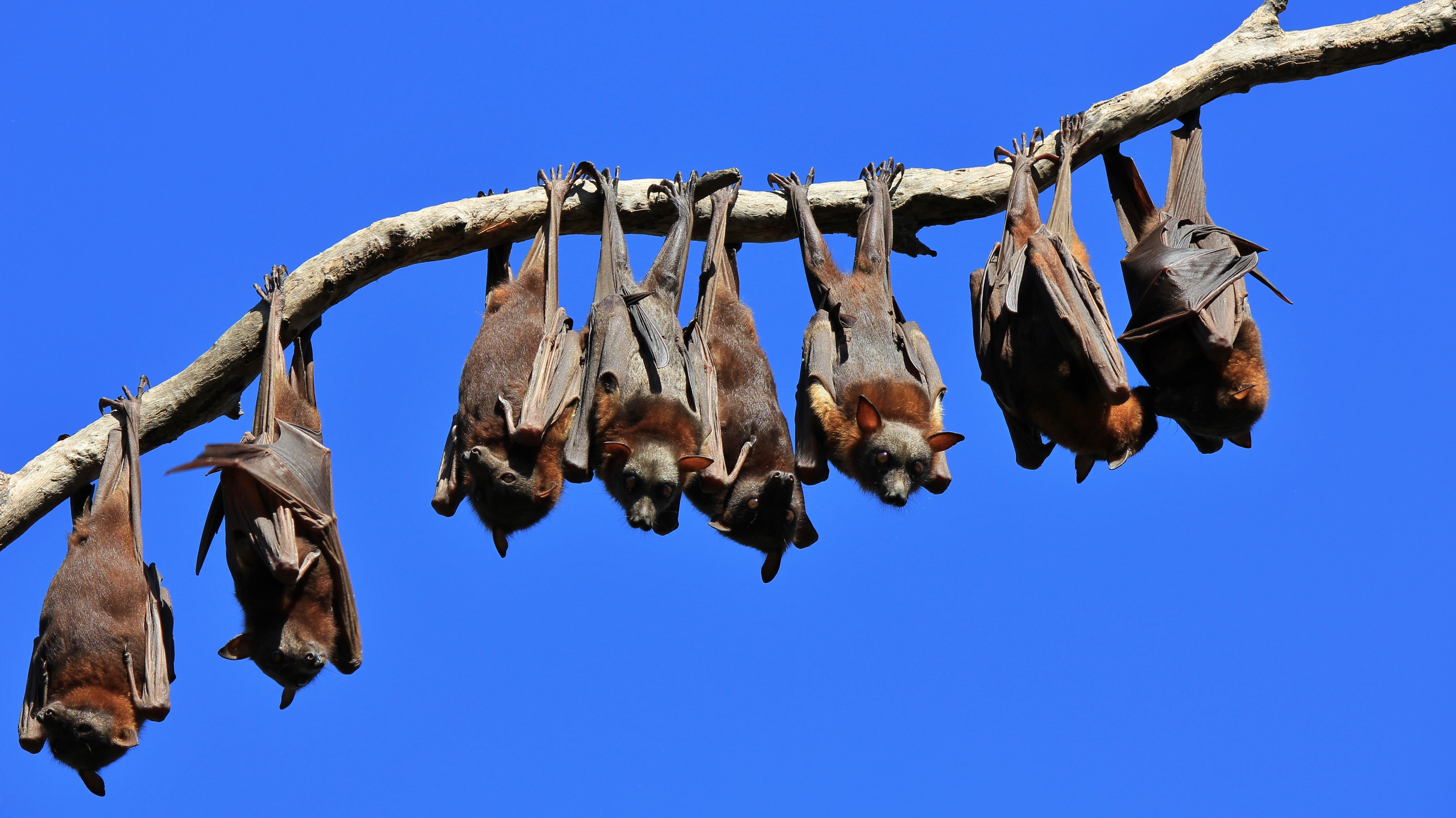 Bats need our help.