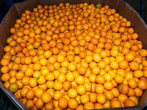 oranges available at the houston food bank