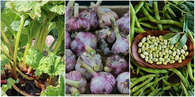 fruit and vegetables to grow in autumn