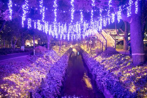Decoration, Purple, Christmas lights, Lavender, Light, Lighting, Christmas decoration, Majorelle blue, Interior design, Christmas,