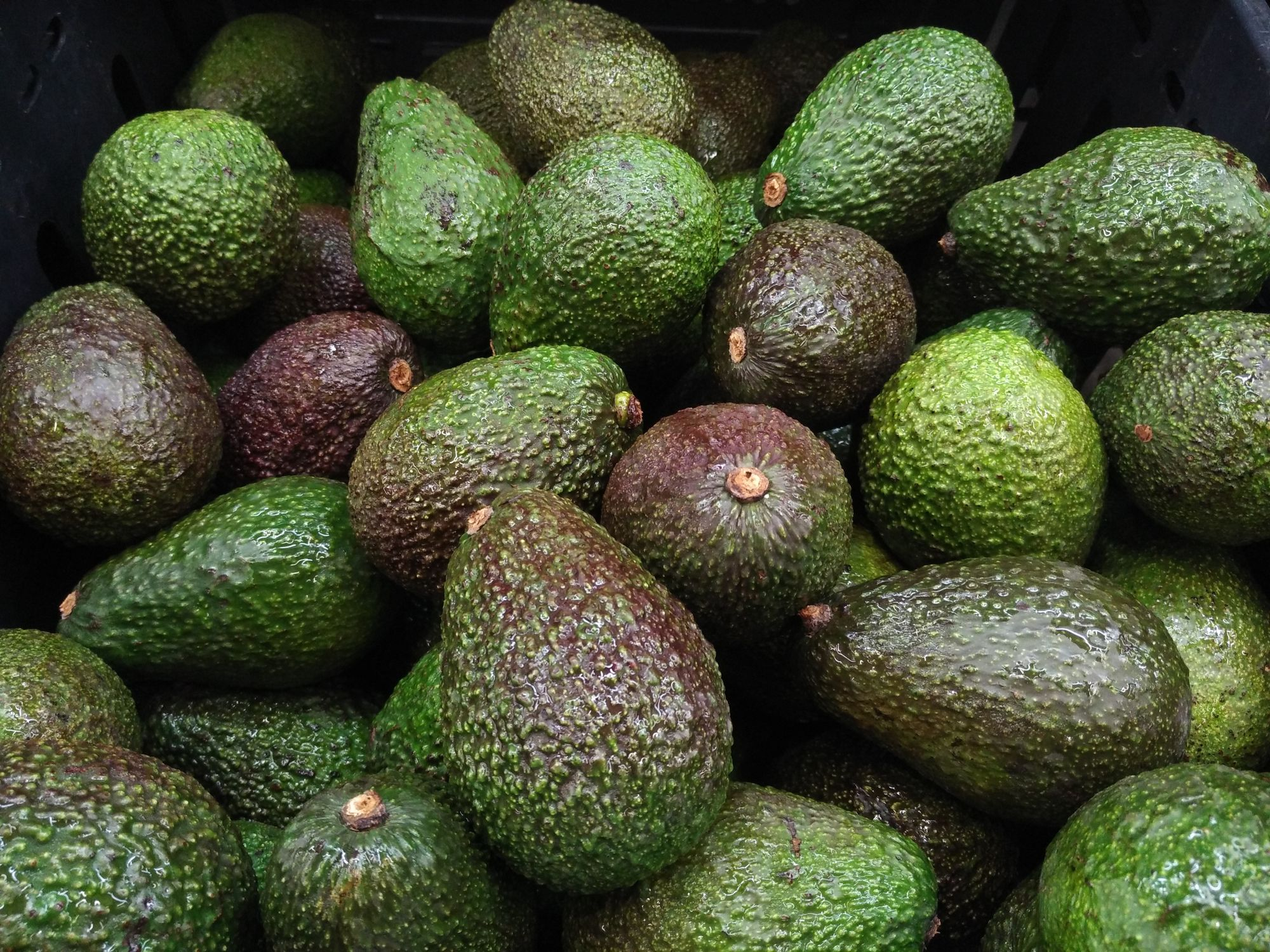 U.S. Avocado Supplies Would Run Out In Less Than A Month If The Mexico Border Closes This Week