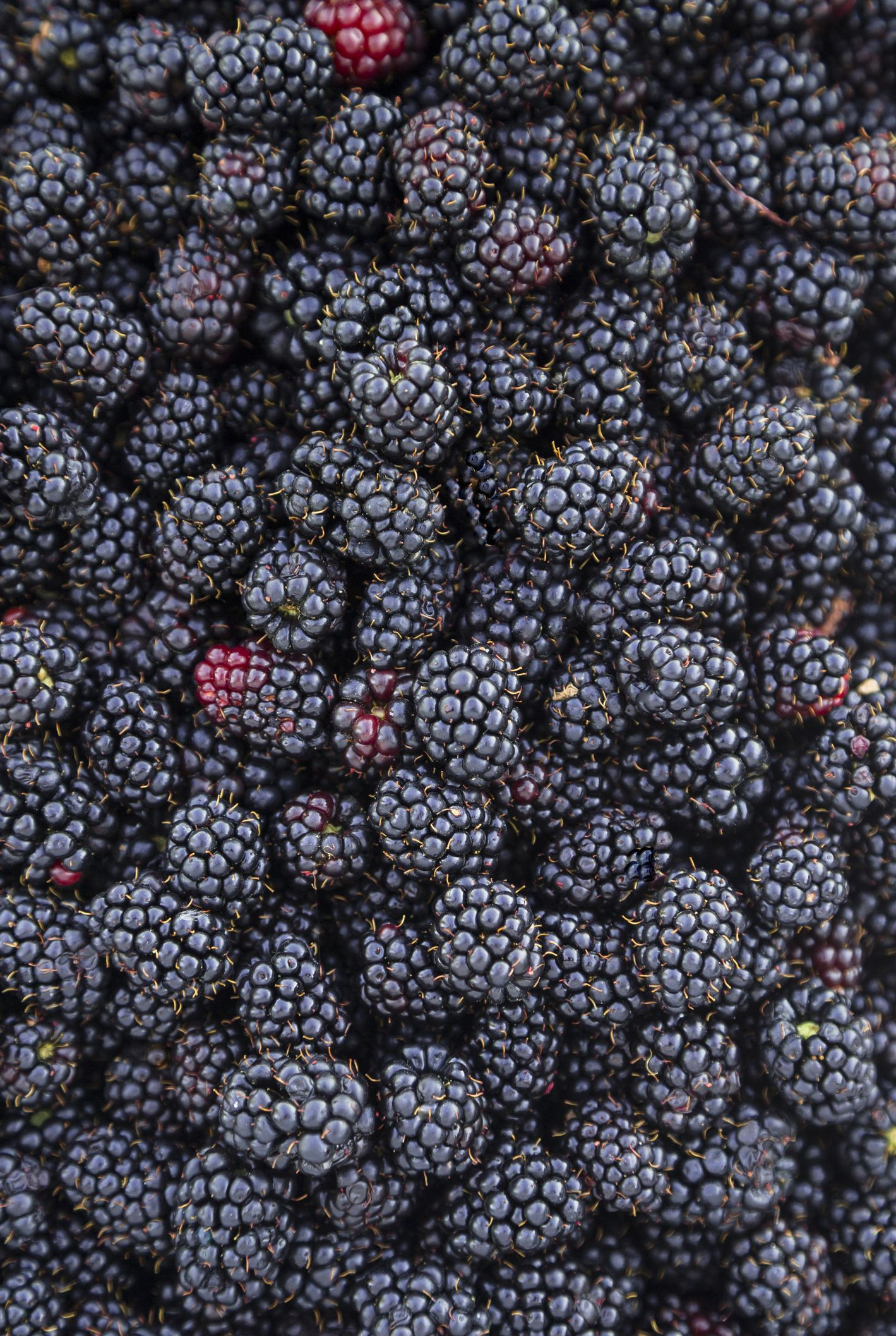 Six States Have Been Affected By A Blackberry-Related Hepatitis A Outbreak