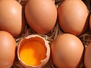 Are Eggs Healthy for You? - The Health Benefits of Eggs