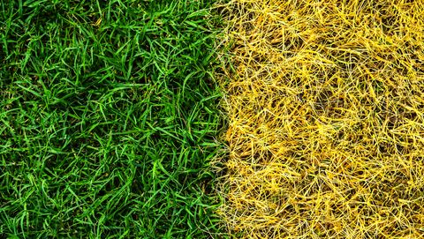 full frame shot of grass or lawn texture