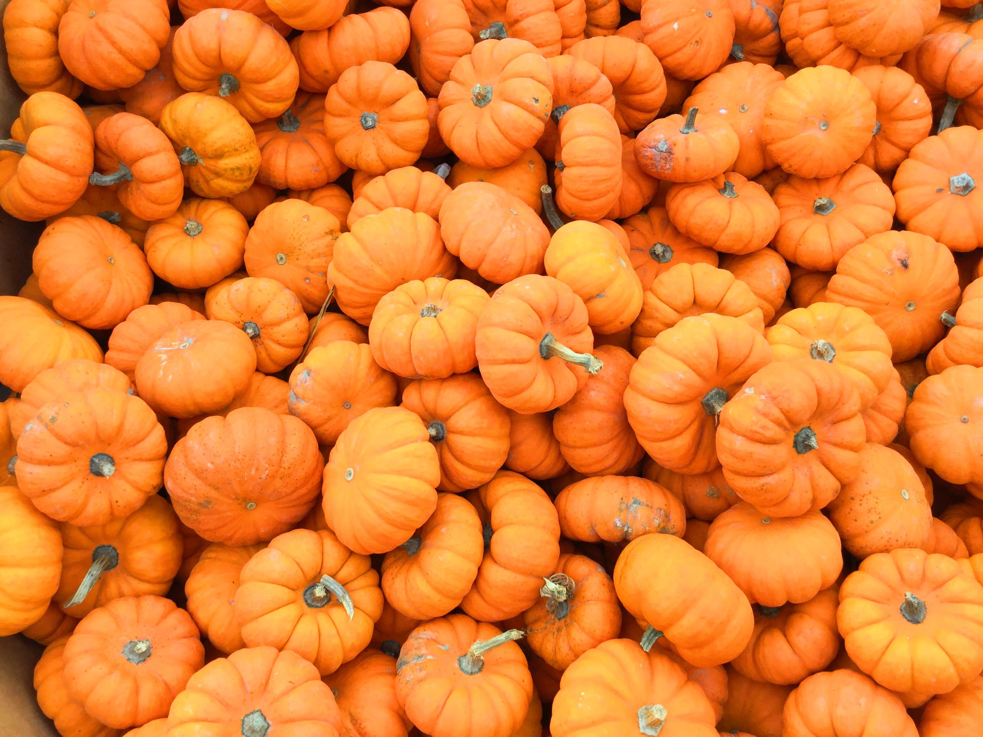 The Unexpected Benefits of Pumpkin for Runners