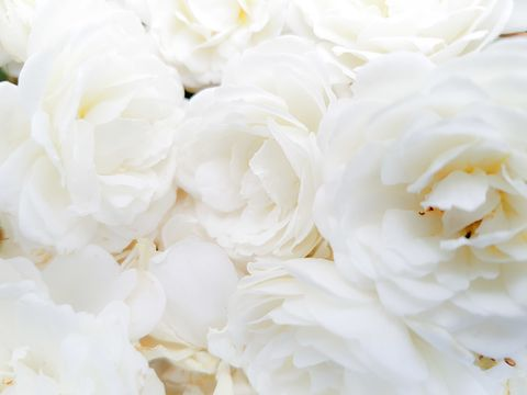 White RosesVeranda