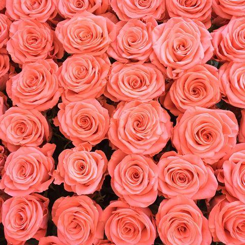 diy face scrubs anti aging rose face scrub