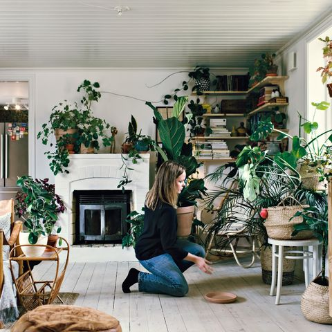 full length side view of woman kneeling while positioning potted plant on hardwood floor at home