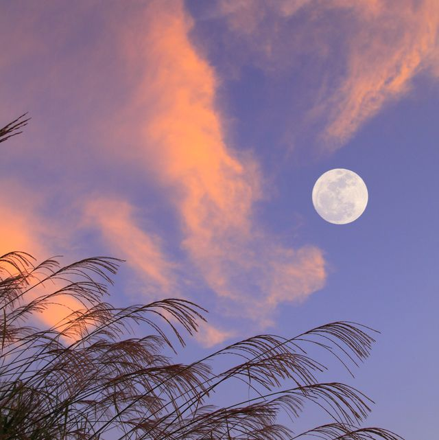 full moon and silver grass
