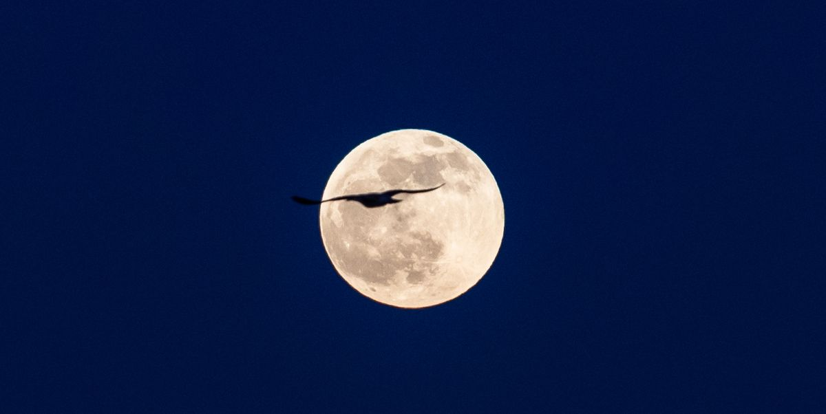 A rare Blue Moon will light up the sky on Halloween and it won't happen again until 2039