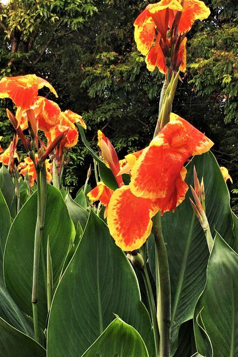 25 Best Full Sun Perennials Plants Flowers For Sunny Gardens