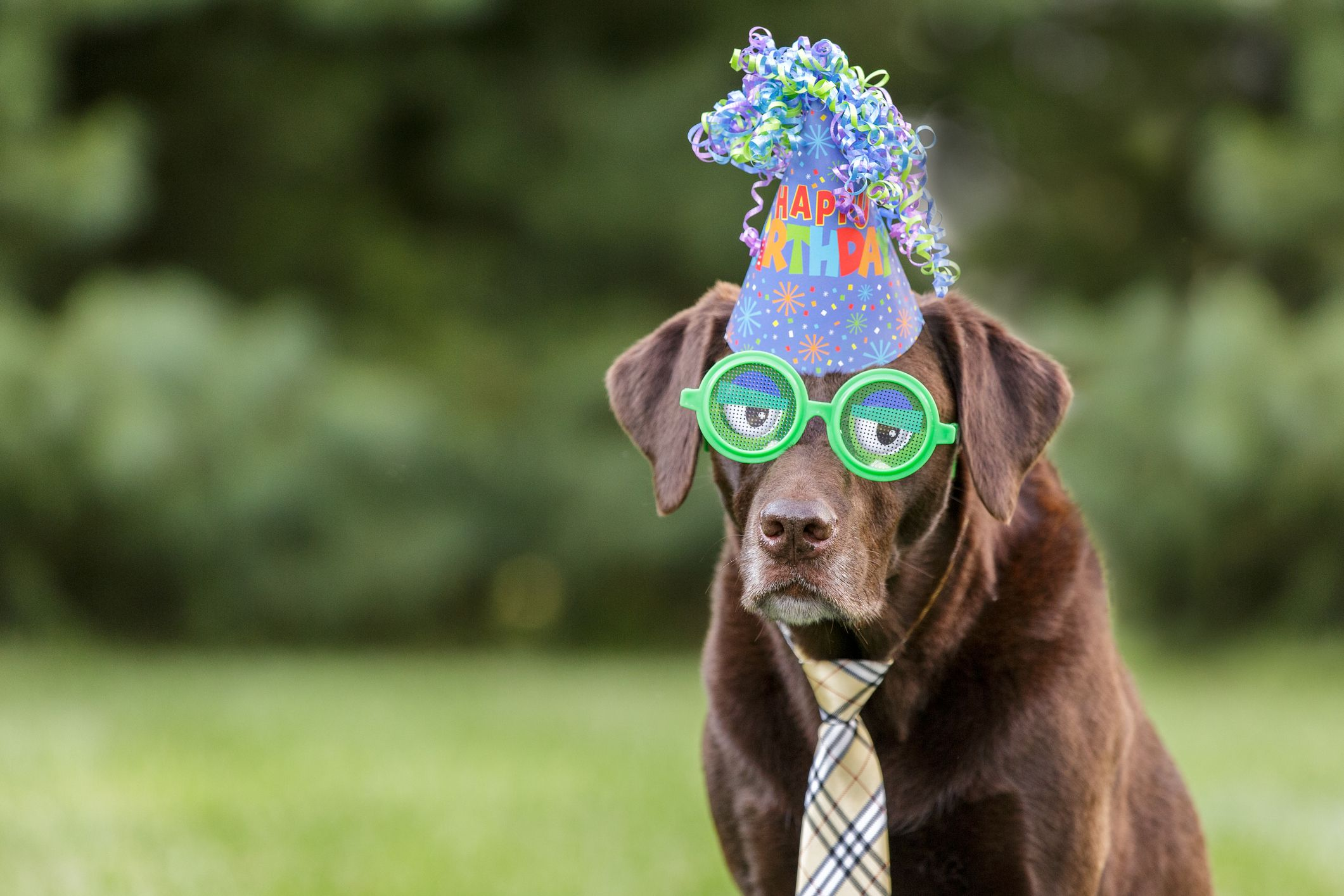 Enjoyable 50 Best Birthday Captions For Instagram Cute And Funny Birthday Funny Birthday Cards Online Overcheapnameinfo