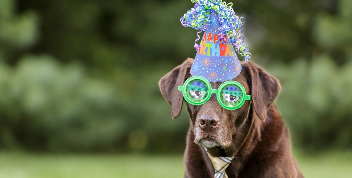50 Best Birthday Captions for Instagram - Cute and Funny ...