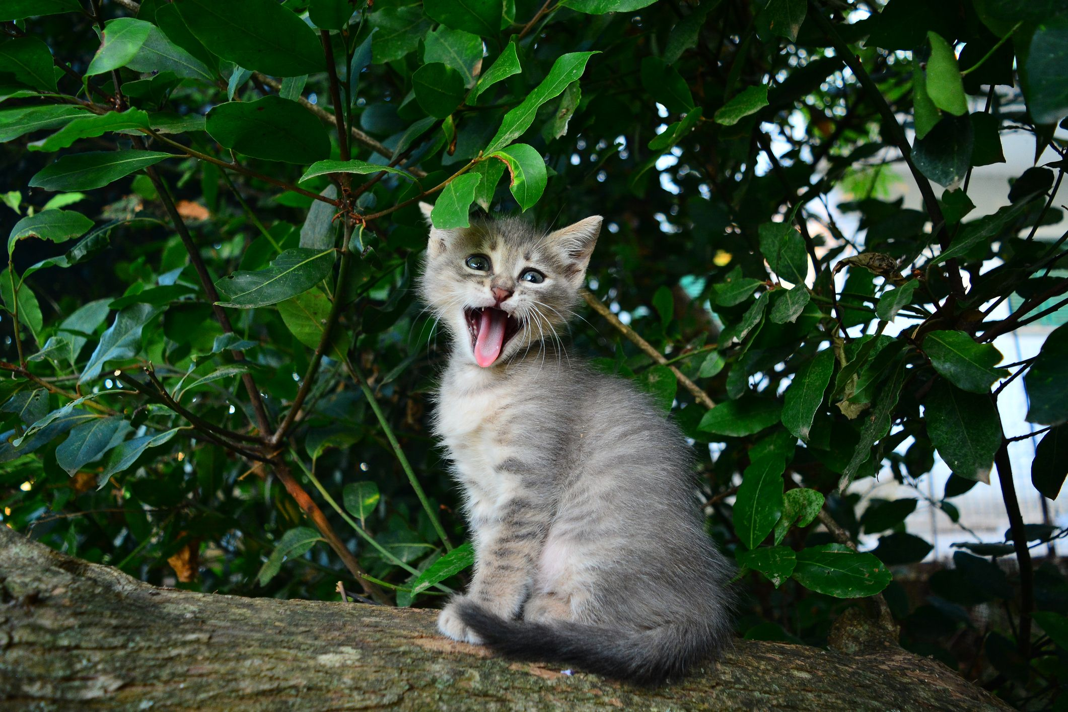19 Funny Cat Memes , Best Cat Memes