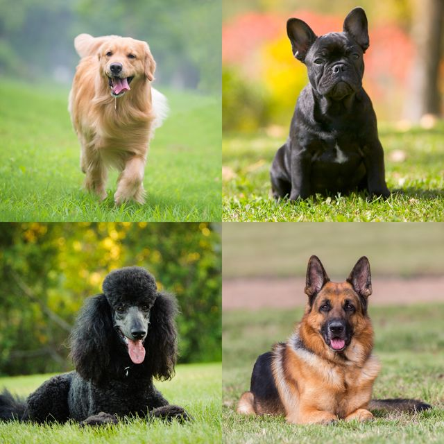 funny dog breeds