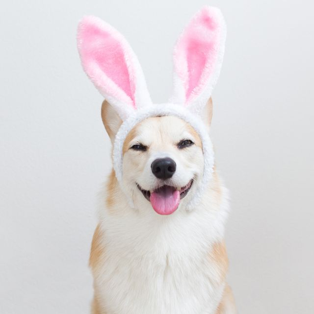 16 Funny Easter Bunny Pictures - Hilarious Pictures of ...