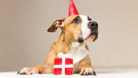 hond huisdier gelukkig cadeautje