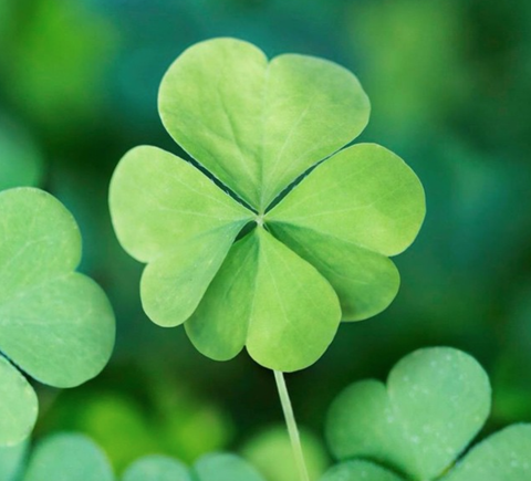 30 St. Patrick's Day Instagram Captions for All Your Magical Moments