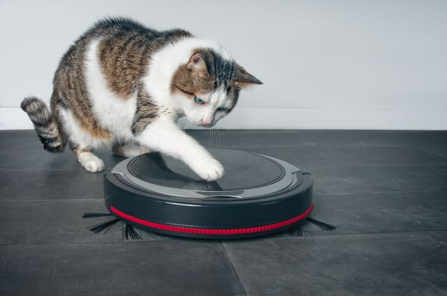 funny tabby cat playing with a robot vacuum cleaner