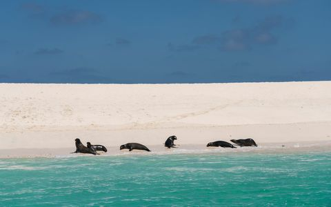 Sky, Sea, Ocean, Water, Seal, Marine mammal, Wildlife, Coastal and oceanic landforms, Island, Vacation,