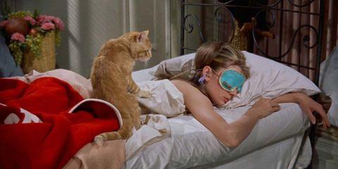 Cat, Felidae, Small to medium-sized cats, Nap, Carnivore, Comfort, Sleep, Whiskers, Birth, Kitten,