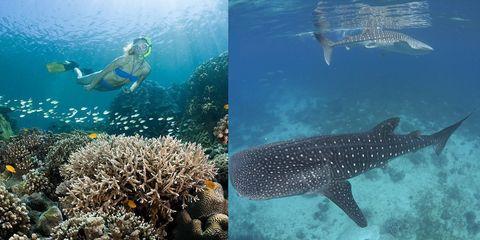 自由潛水,海島,freediving,潛水,薄荷島,綠島綏陽艦,自由潛水推薦