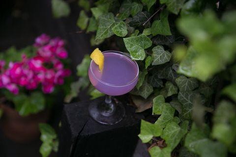 Flower, Purple, Plant, Pink, Violet, Petal, Violet family, Viola, Annual plant, Garden,