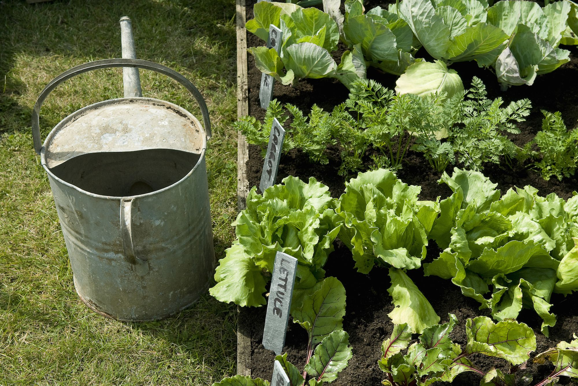 Here's How to Keep Your Vegetable Garden Alive