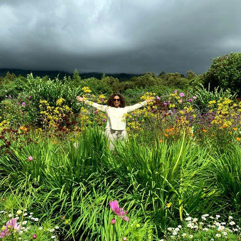 Natural landscape, Nature, Meadow, Vegetation, Flower, Grass, Green, Natural environment, Garden, Plant,