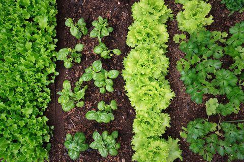 garden bed plantings