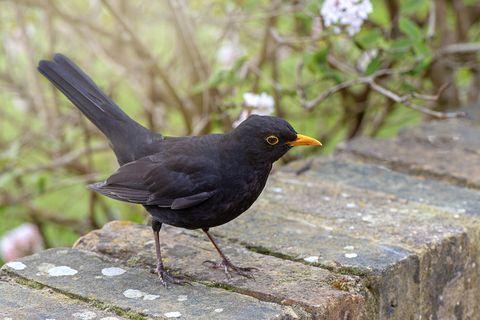 garden birds advice for feeding