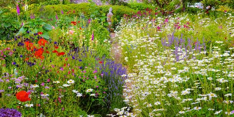 Flower, Flowering plant, Plant, Meadow, Natural environment, Wildflower, Botany, Groundcover, Grass family, Garden,