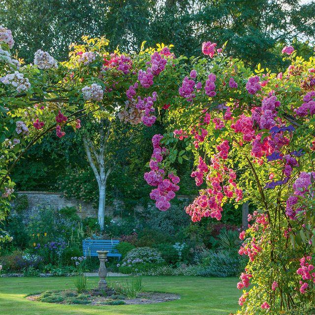 garden boundary ideas