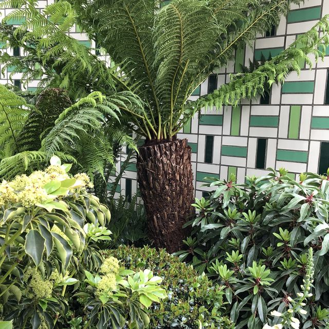 Chelsea Flower Show 2019 garden trends, Society of Garden Designers