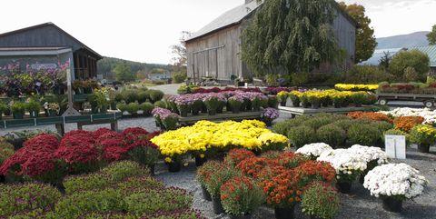 garden center in the autumn