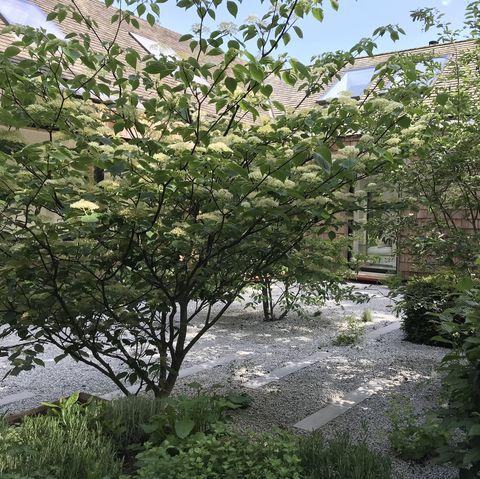 Jardin d'arbres à plusieurs tiges par Caitlin McLauglin