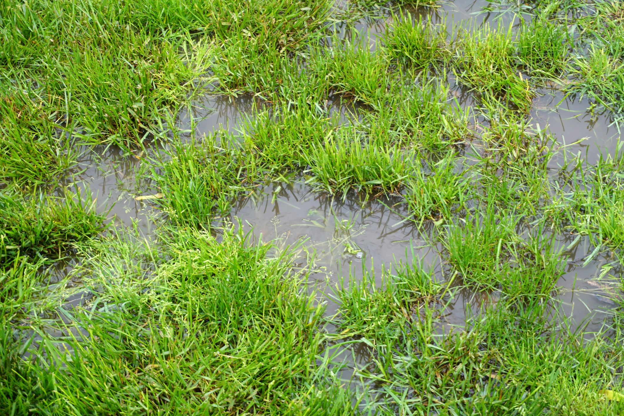 How to improve your garden's drainage
