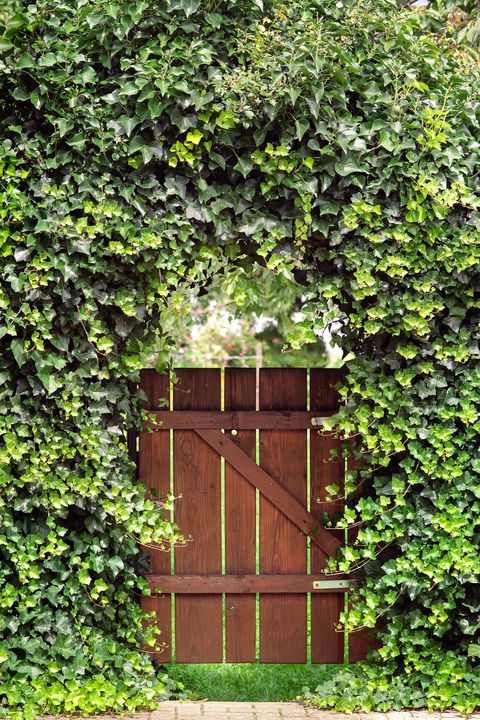 garden gate with ivy arch