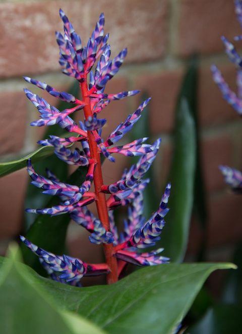 Bright plants photo
