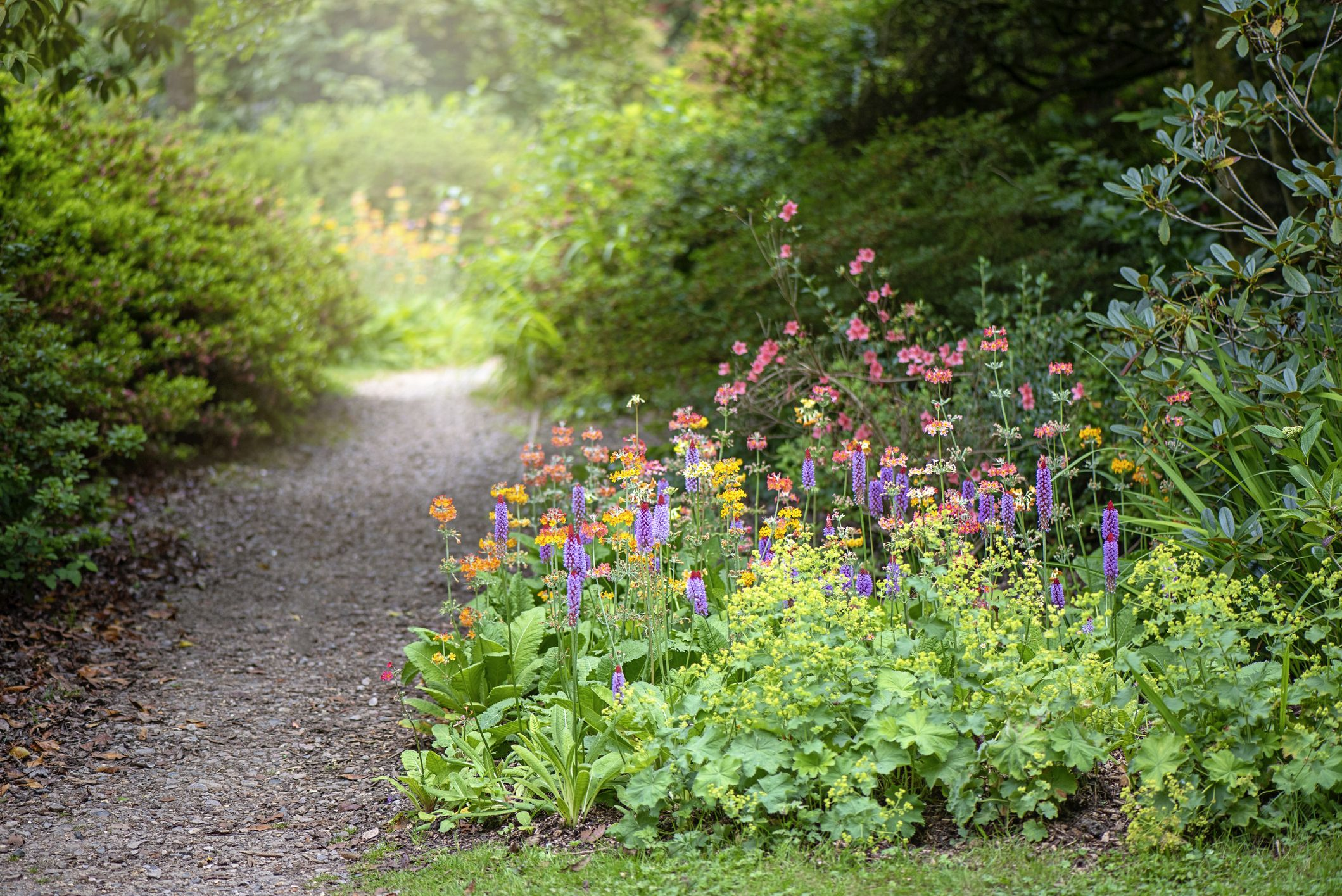 These 5 traditional garden plants are making a comeback